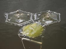 Plastic bags with semi-permeable membranes allow fresh water to flow out into the ocean, while retaining the algae and nutrients.