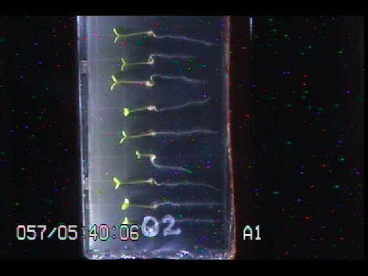 Screenshot shows seedlings successfully growing in the International Space Station as part of the Tropi experiment to study plant growth in space.