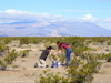 Collecting specimens in the Mojave desert.