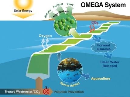 Conozca el proyecto OMEGA de microalgas