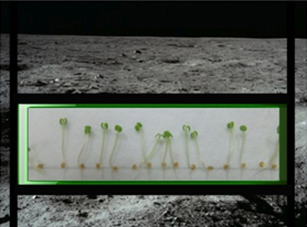 Test plants for lunar plants mission