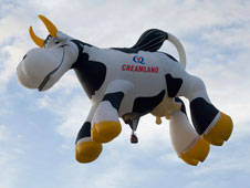 cow balloon flying at Balloon Fiesta.