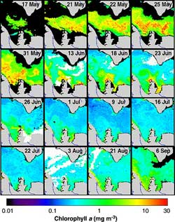 This is a SeaWiFS satellite time series of the 1998 phytoplankton bloom in the Cape Bathurst polynya region.