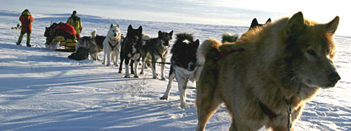 The team of sled dogs prepares to embark on the Arctic trek that will enable researchers to collect snowsamples.