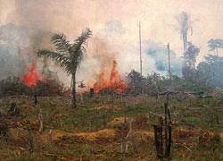 This image shows burning and deforestation of the Amazon forest to make grazing lands.