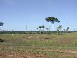 Image of a pasture in Mato Grosso, Brazil.