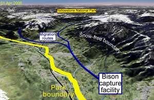 This image was created from NASA Landsat satellite data and shows the migratory path of the bison herd in Yellowstone National Park.