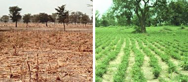 The left image shows a field during Senegal's dry season. At right is the same field in the wet season.