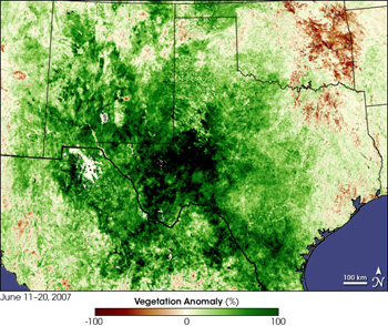NASA created this image of areas of Texas where lush, green vegetation grew due to the same heavy rains that caused floods statewide. NASA collected data from the U.S. Department of Agriculture's Foreign Agricultural Service, captured by France's SPOT satellite between June 11 and June 20, 2007.