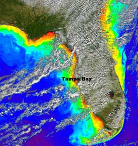 High concentrations of microscopic plants called phytoplankton along the Florida coast and in Tampa Bay are an indicator of ocean health and change as seen in this SeaWiFS image from October 2004.