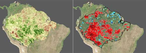 During the 2005 drought in the Amazon, intact primary forest showed an increase in photosynthetic activity, see left image, despite below average rainfall, see right image.