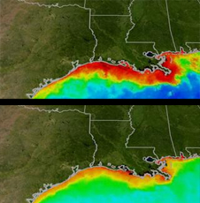 Phytoplankton along Gulf Coast in summer and winter