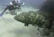 Mike Weiss gets a shot of a large grouper.