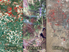 Landsat images showing (left to right) agricultural land use, forests, urban area