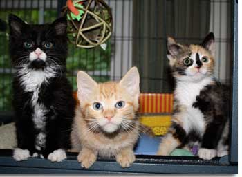 Three kittens that Mindy has rescued.