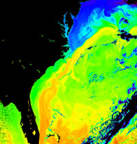 This is a NASA satellite image of the warm waters of the Gulf Stream running up the U.S. eastern seaboard.