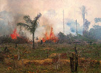 The image shows burning and deforestation of the Amazon forest to make grazing lands.