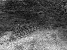 Three of Titan's major surface features-dunes