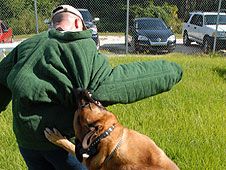 K-9 Carlos attacks Officer John McGee during training exercise