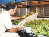 Dr. Ray Wheeler checks on hydroponically grown lettuce in the Biomass Production Chamber at Hangar L in 1992