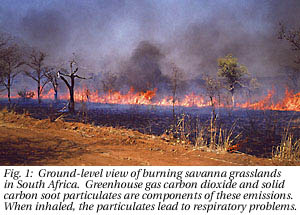 Biomass burning in South Africa