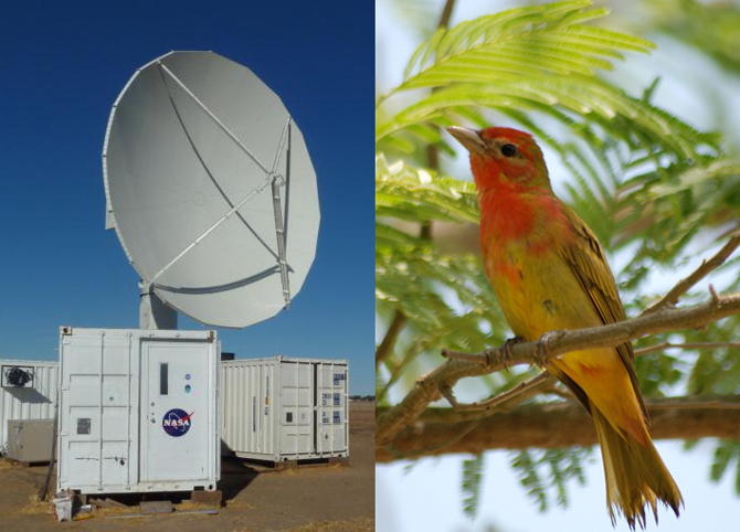 Left, NASA's NPOL radar. Right, the Summer Tanager.