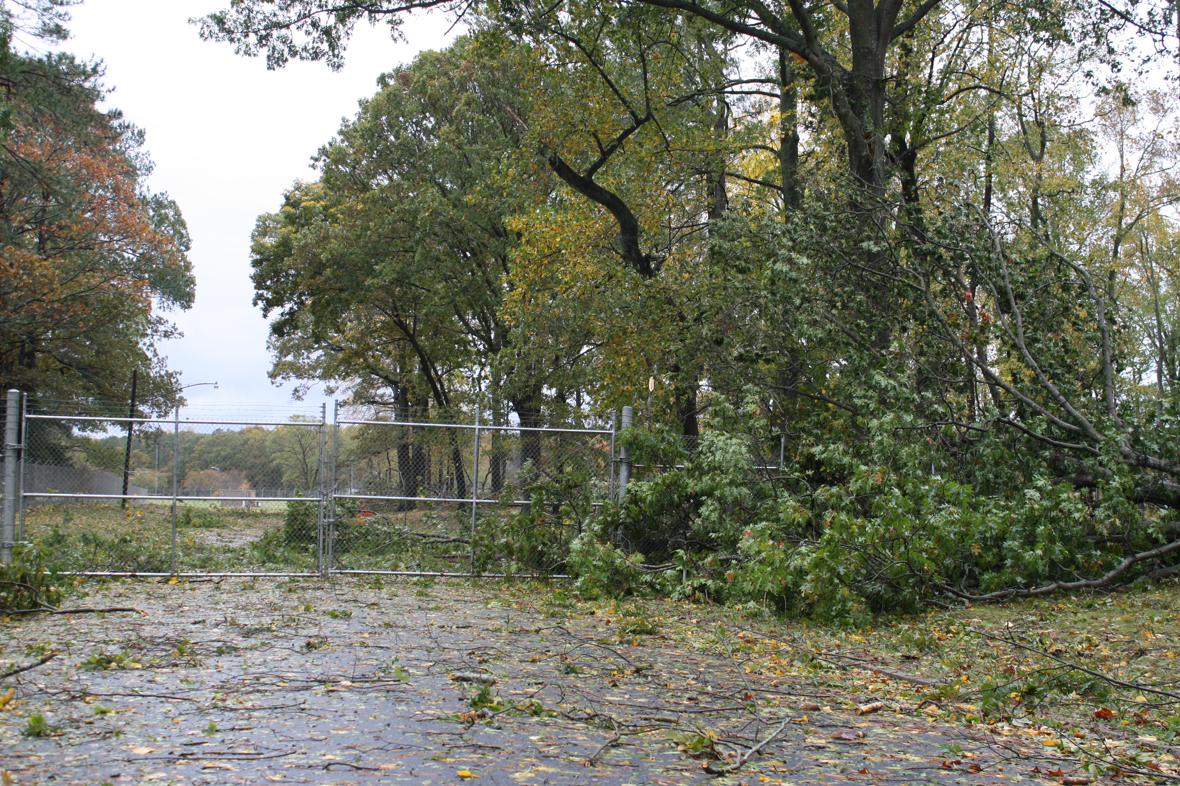 Trees were downed, but initial assessments show that Wallops faired well during Hurricane Sandy.
