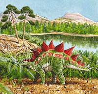 The Mesozoic Era  was the Age of Dinosaurs. Plant-eating dinosaurs, such as this  Stegosaurus, fed on cycads and conifers, early trees that thrived before  modern flowering trees appeared.