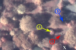 Image of same horses from space taken by the cameras on the Quickbird satellite.