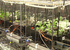 Plant growth chambers at the Space Life Sciences Lab, located at NASA's Kennedy Space Center, Fla.