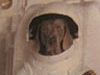 Wegman photos of dogs in spacesuits in DC Metro