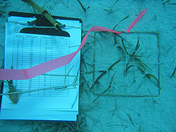 A square grid and a clipboard with a data table rest on the ocean floor