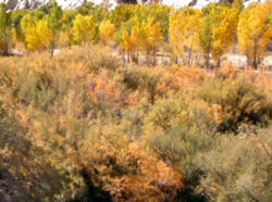 Watching the Seasons Change with Tamarisk