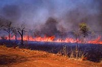 Ground-level view of burning savanna grasslands in South Africa