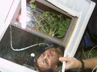 NASA astronaut Peggy Whitson examines a plant experiment on the International Space Station