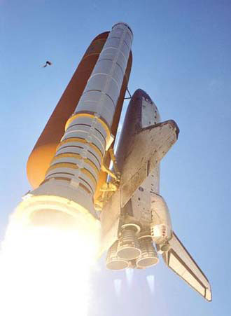 Bird hits Discovery's external tank during 2005 launch.