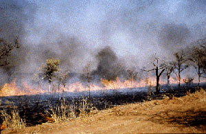 Biomass burning, including forest fires and the burning of fields in the tropics, is a large source of pollutants.