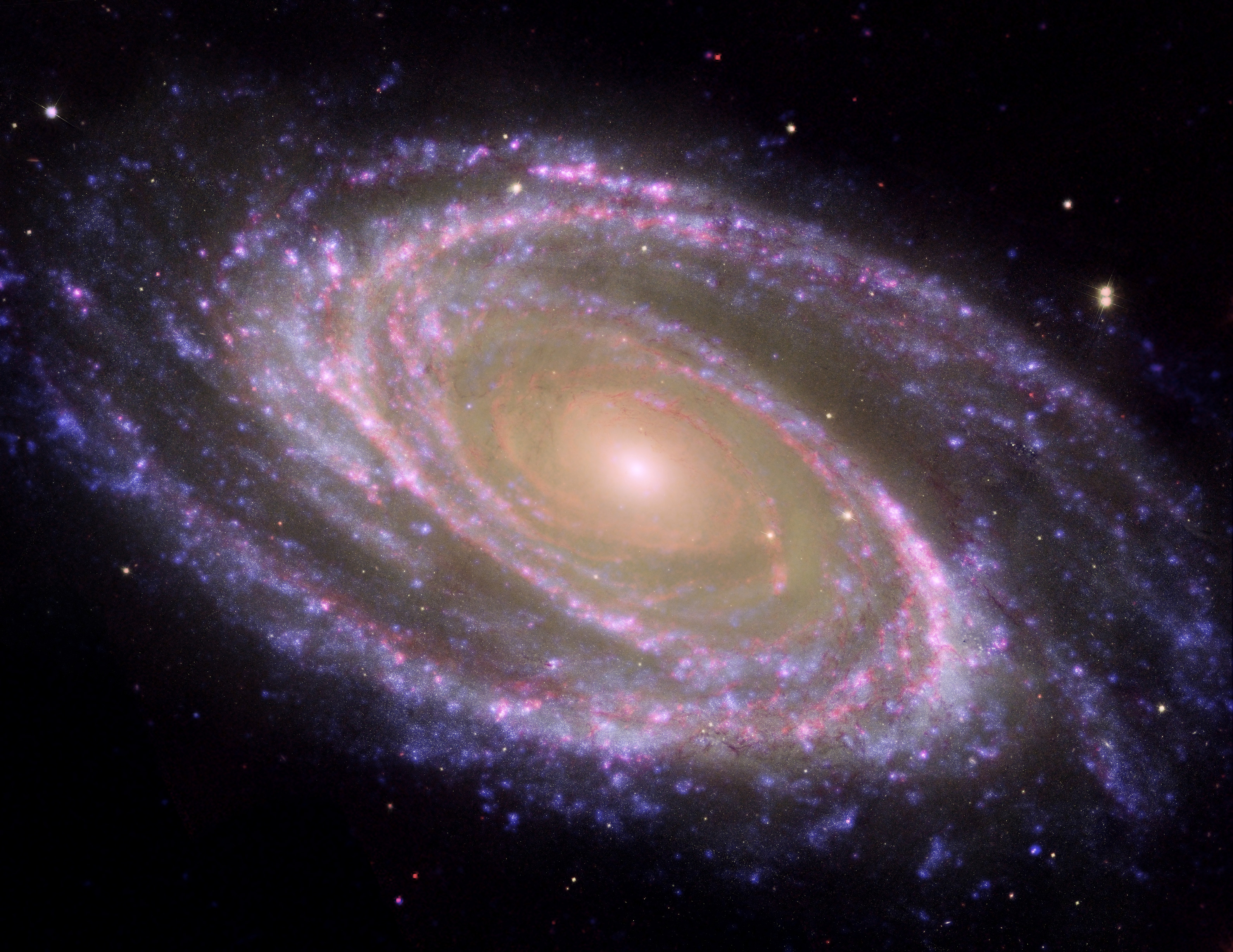 NASA - M81 Galaxy is Pretty in Pink