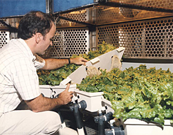 Ray Wheeler kneeling in front of containers of green, leafy lettuce