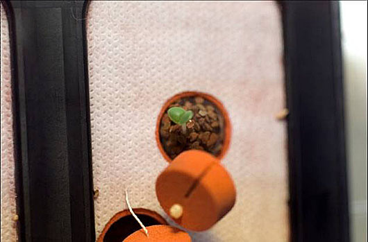A top-view of soil and a green sprout in a small brown pot in the plant growth chamber