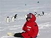 Woman in red coat sitting in snow next to some penguins