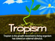 Cartoon drawing of a plant growing from the ground, with the word Tropism in lower foreground