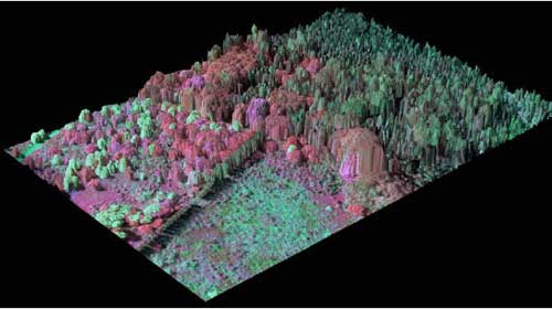 3D images show invasive tree species, depicted in reds and pinks, and Native Hawaiian Lowland Rainforest, depicted in green.