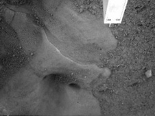 Potential Ice Table Under Lander Imaged