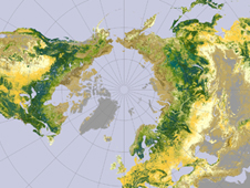 Graphic showing global forest cover