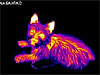 An infrared image of a dog