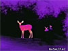 An infrared image of a deer in the dark