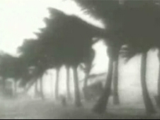 Trees blowing during a hurricane