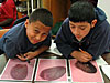 Two students looking at large images of seeds