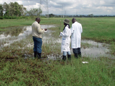 Scientists study a typical dambo habitat at Sukari Farm